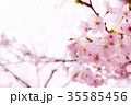 桜 花 春の写真 35585456