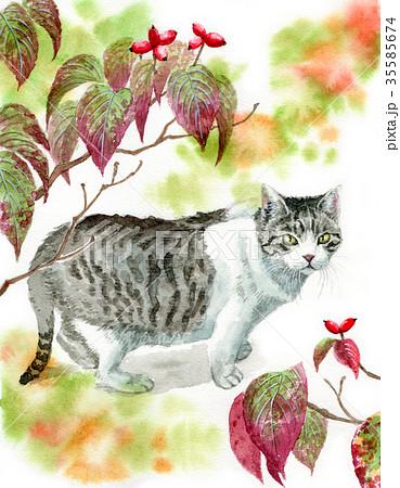 水彩で描いた猫とハナミズキの枝 35585674
