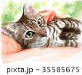 猫 子猫 動物のイラスト 35585675
