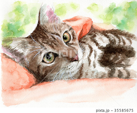 水彩で描いた抱っこされている猫 35585675