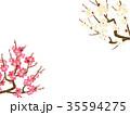 梅 白梅 梅の花のイラスト 35594275