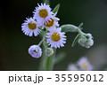 霜 植物 花の写真 35595012