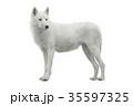 おおかみ オオカミ 狼の写真 35597325