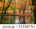軽井沢雲場池紅葉 35598791