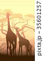 動物 きりん キリンのイラスト 35601257