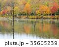 女神湖 紅葉 秋の写真 35605239