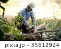 剪定 庭師 業者 ビジネス 仕事 電動のこぎり 切る 伐採 木  35612924