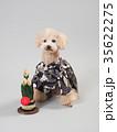 犬 門松 晴れ着の写真 35622275