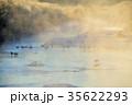 丹頂鶴 霧氷 雪裡川の写真 35622293