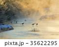 丹頂鶴 冬 雪裡川の写真 35622295