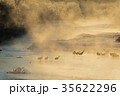 丹頂鶴 冬 雪裡川の写真 35622296