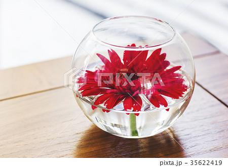 Interior flower gerbera in round vase の写真素材 [35622419] - PIXTA