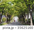 街路樹のアーチ 35625160