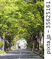 街路樹のアーチ 35625161