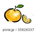 夏みかん 35626337