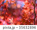 紅葉 秋 楓の写真 35632896