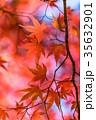 紅葉 秋 楓の写真 35632901