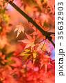 紅葉 秋 楓の写真 35632903