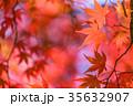 紅葉 秋 楓の写真 35632907