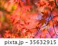 紅葉 秋 楓の写真 35632915