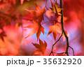 紅葉 秋 楓の写真 35632920