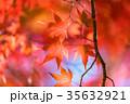 紅葉 秋 楓の写真 35632921