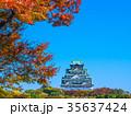 秋の大阪城 35637424