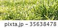 グリーン 緑色 草の写真 35638478