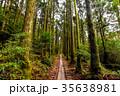 屋久島 トロッコ道 35638981