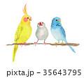 オカメインコ 文鳥 セキセイインコ  35643795