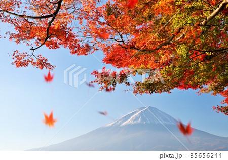 秋の紅葉と落葉 そして富士山 35656244