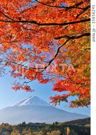 秋の紅葉と富士山 35656245
