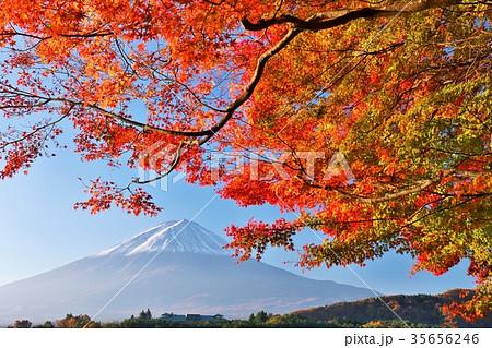 秋の紅葉と富士山 35656246