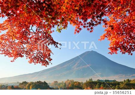 富士山と秋の紅葉 35656251