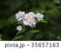 植物 自然 花の写真 35657163