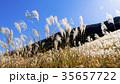 仙石原の秋の風物詩・ススキ原 35657722