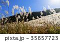 仙石原の秋の風物詩・ススキ原 35657723