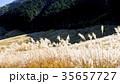 仙石原の秋の風物詩・ススキ原 35657727