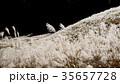 仙石原の秋の風物詩・ススキ原 35657728