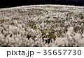 仙石原の秋の風物詩・ススキ原 35657730