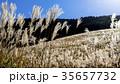 仙石原の秋の風物詩・ススキ原 35657732
