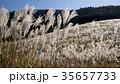 仙石原の秋の風物詩・ススキ原 35657733