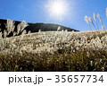 仙石原の秋の風物詩・ススキ原 35657734