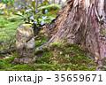 地蔵 わらべ地蔵 苔の写真 35659671
