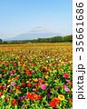 山中湖村 富士山 百日草の写真 35661686