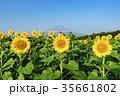 富士山 ヒマワリ 向日葵の写真 35661802