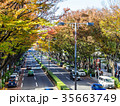秋の表参道 35663749