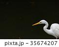 鳥 鷺 鳥類の写真 35674207