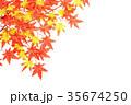 もみじのフレーム 35674250
