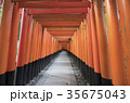 京都 伏見稲荷 伏見稲荷大社の写真 35675043
